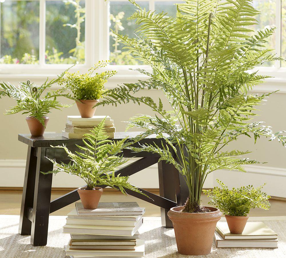 дом растения комнатные картинки можно собрать целую